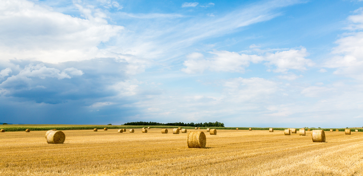 front-page-bales-in-field-1140x250